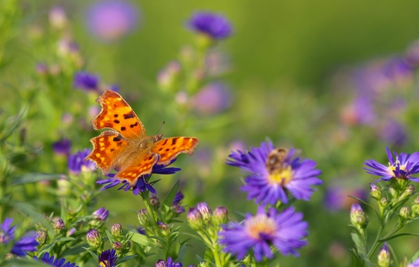 Picture field, flowers, bee, butterfly, wings, meadow, insect
