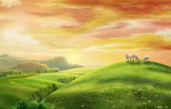 Picture summer, sunrise, morning, pasture, meadow, space