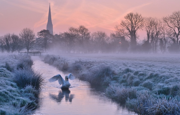 Picture winter, frost, the sky, trees, sunset, fog, river, bird, England, the evening, Cathedral, UK, Swan, …
