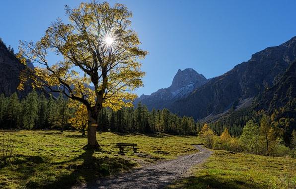 Picture autumn, trees, mountains, bench, tree, Austria, valley, Alps, path, Austria, Alps, Karwendel, Tyrol, Tyrol, Karwendel