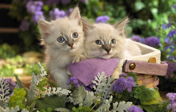 Picture cats, flowers, kitty, basket, garden, pair, kittens, basket, lilac, Kote, basket