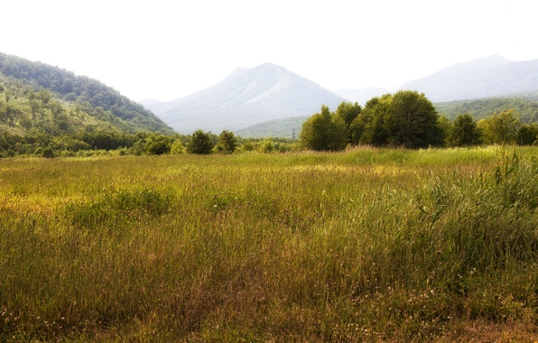 Picture field, grass, trees, mountains, meadow, Russia, forest, Kamchatka