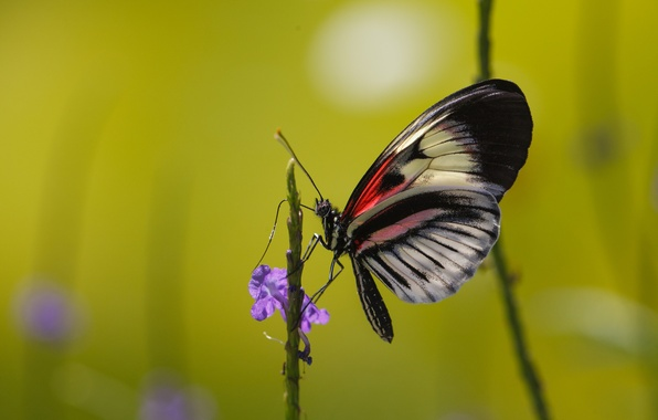 Picture flower, butterfly, plant, insect, moth
