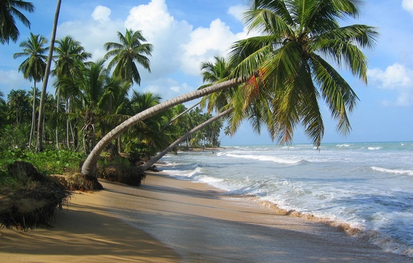 Picture sand, sea, beach, the sky, clouds, tropics, Palma, the ocean, surf