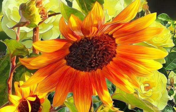 Picture flower, line, paint, sunflower, petals
