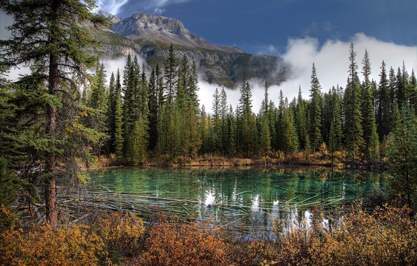 Picture photo, Nature, Mountains, Lake, Canada, Spruce, Park, Banff