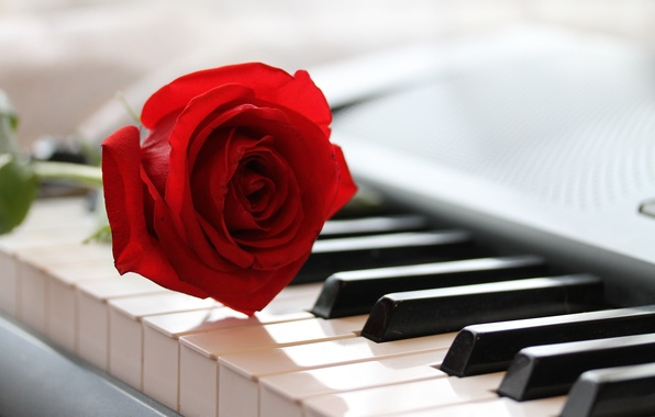 Photo Wallpaper Music Piano Rose