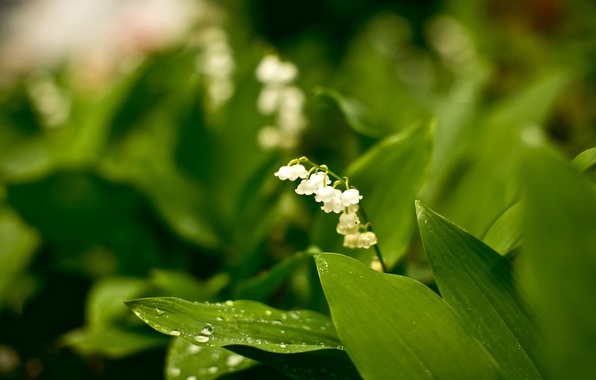 Picture forest, white, flowers, nature, Park, beauty, plants, garden, green, modesty