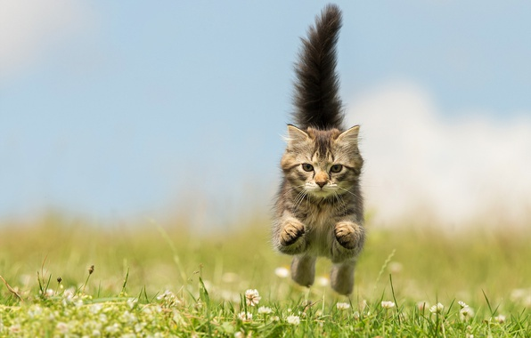 Picture greens, summer, grass, flowers, jump, paws, muzzle, tail, kitty, bokeh