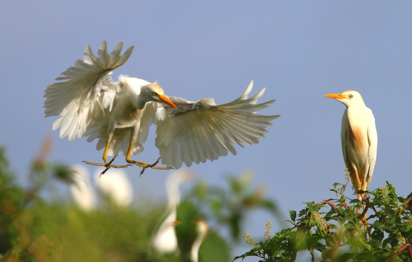 Picture the sky, flight, birds, tree, wings, paws, pair, landing