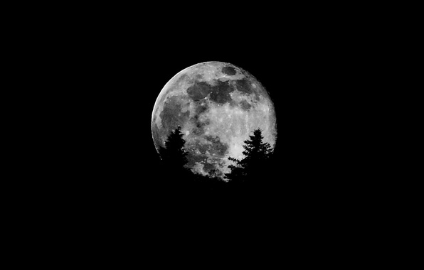 Picture trees, the moon, satellite, silhouette, Moon