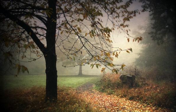 Picture landscape, nature, fog, Park, background, tree