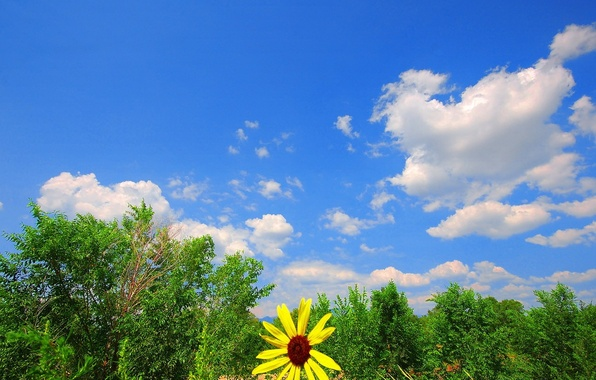 Picture greens, flower, the sky