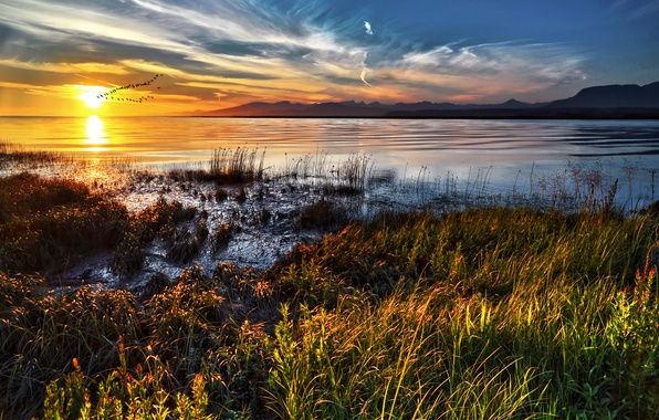 Picture sunset, coast, Canada, Photographer IvanAndreevich, a flock of birds