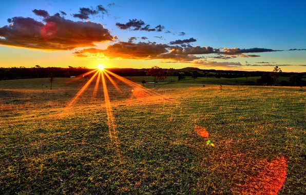 Picture field, the sky, grass, the sun, clouds, rays, trees, sunset, nature, horizon