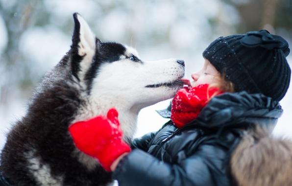Picture winter, dog, child, husky