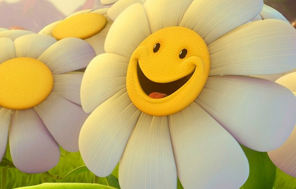 Picture flower, smile, Daisy