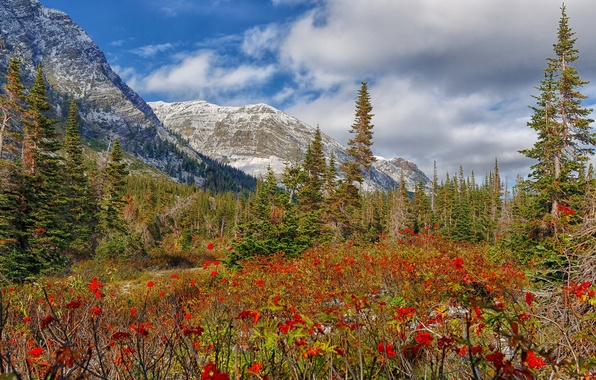 Picture snow, trees, flowers, mountains, meadow