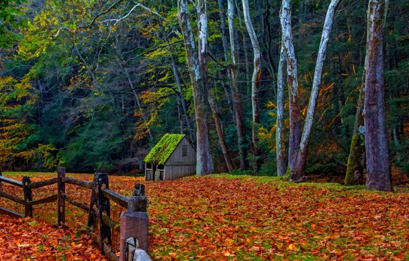 Picture road, autumn, forest, grass, leaves, trees, nature, house, Park, colors, colorful, house, grass, forest, road, …