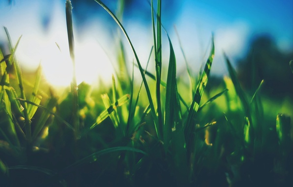 Picture The sun, The sky, Grass, Plant