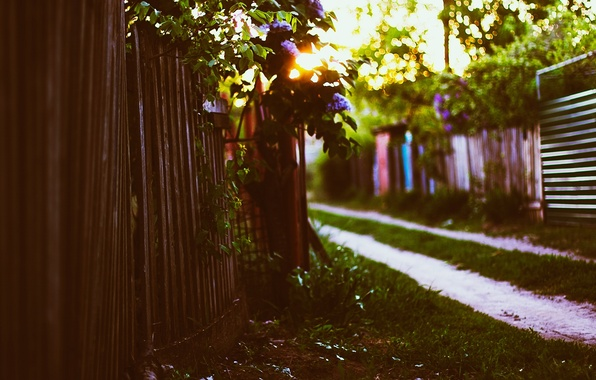 Picture grass, the sun, sunset, foliage, the fence, spring, lilac, bokeh, cottage