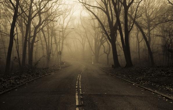 Picture road, autumn, nature, fog, Park, morning