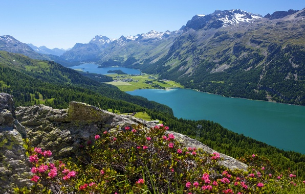 Picture forest, flowers, mountains, lake, stones, Switzerland, valley, slope, panorama, town, the view from the top, …