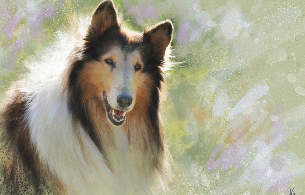Picture face, figure, portrait, dog, picture, painting, Sunny, strokes, collie, Wallpaper from lolita777