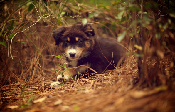 Picture grass, nature, plant, dog, puppy, lying, Ridley