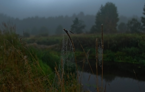 Picture drops, river, morning, Web