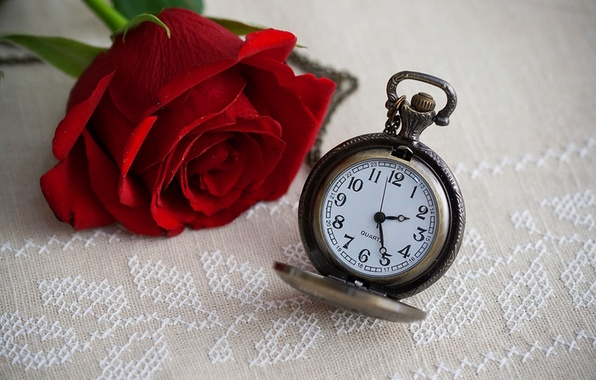 Wallpaper flower, time, watch, rose, rose, dial, flower