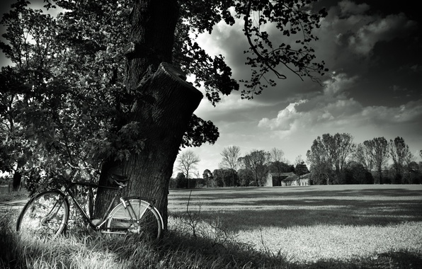 Picture field, landscape, nature, bike, tree, bicycle, black and white, field, landscape, nature, tree, black and …