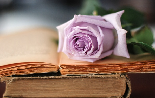 Picture flower, lilac, rose, books, old, petals