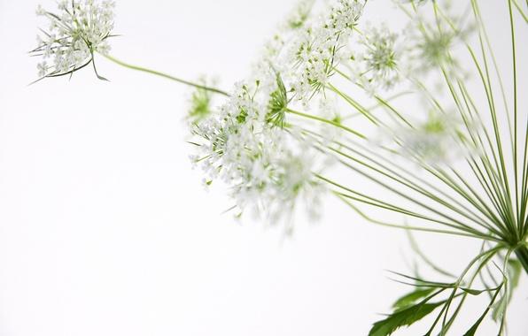 Picture flowers, macro