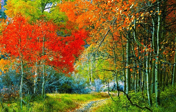 Picture FOREST, GRASS, TRAIL, TREES, BRANCHES, VEGETATION, AUTUMN, FOLIAGE