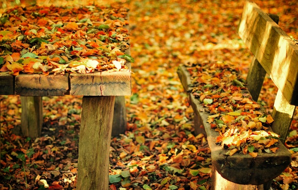 Picture autumn, leaves, bench, nature, Park, table, shop, shop, bench
