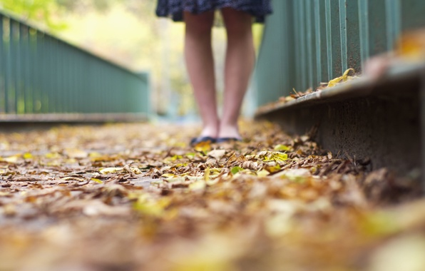 Picture leaves, girl, macro, background, Wallpaper, feet, yellow, green, leaves, different, widescreen, full screen, HD wallpapers, …