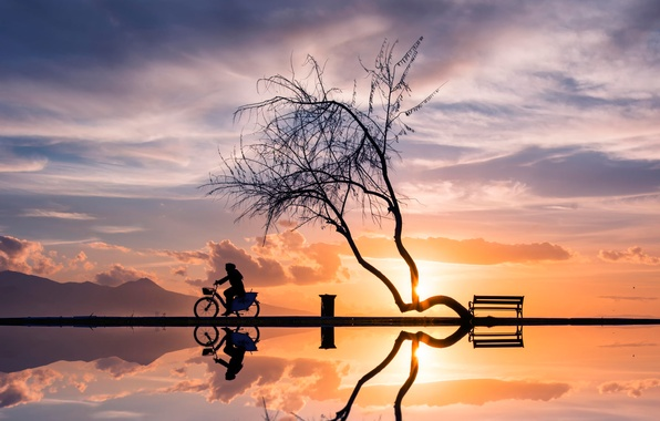 Picture sunset, bike, reflection, tree, woman, silhouettes