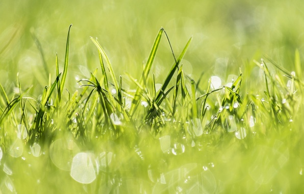 Picture grass, light, nature, green, green, plants, light, grass, nature, plants