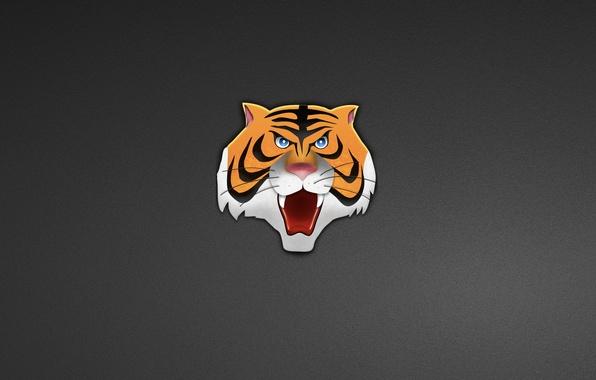 Picture tiger, minimalism, head, tiger, head