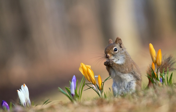 Picture background, yellow, protein, red, white, lilac, spring. crocuses