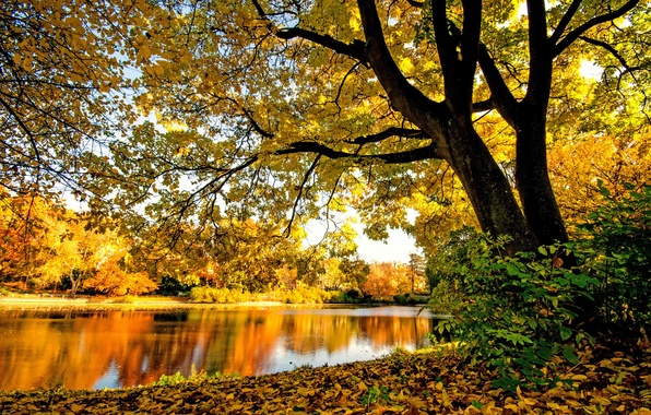 Picture autumn, forest, trees, branches, river, foliage, yellow