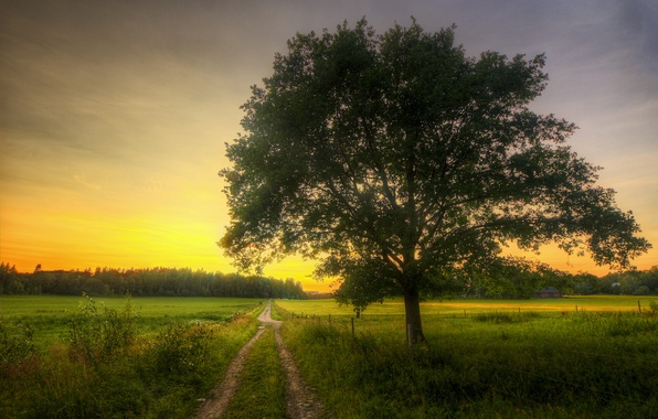 Picture road, house, tree, field, spring, morning, grove