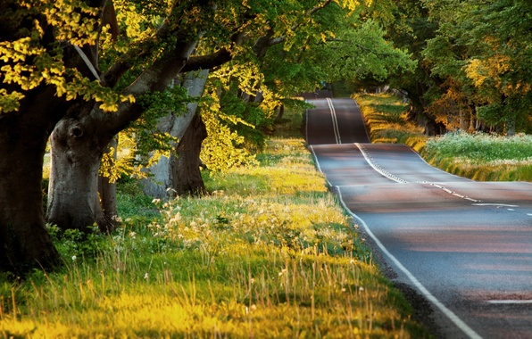 Picture road, greens, summer, asphalt, the sun, rays, light, trees, nature, plants, the evening