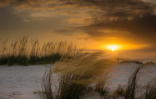 Picture winter, beach, the sun, sunset, the wind, plants, FL, dunes