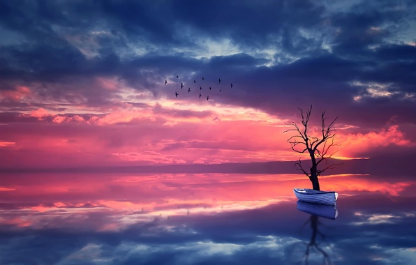 Picture the sky, water, landscape, sunset, birds, nature, reflection, tree, boat