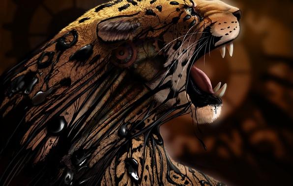 Picture spot, Cheetah, fangs