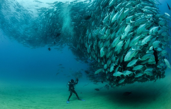 Picture fish, pack, the diver, under water, cant