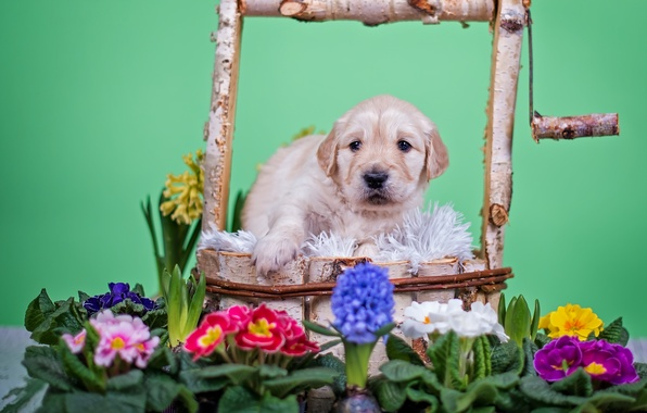 Picture flowers, animal, dog, well, puppy