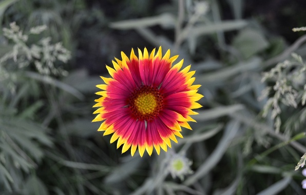 Picture nature, Flower, petals